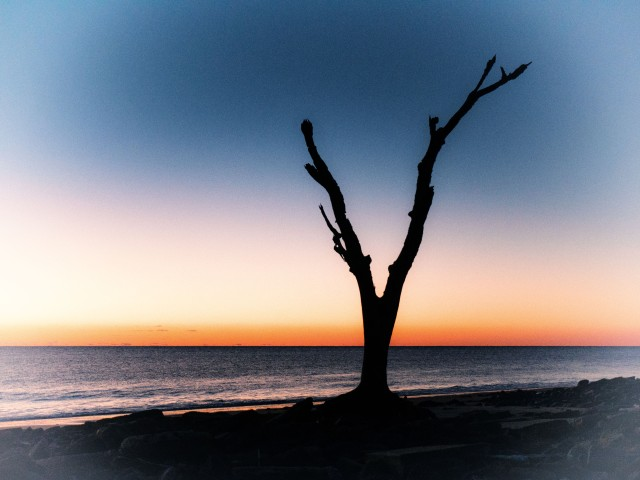 Jekyll Island tree at sunrise