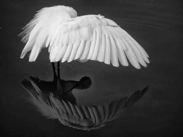 bird bw
