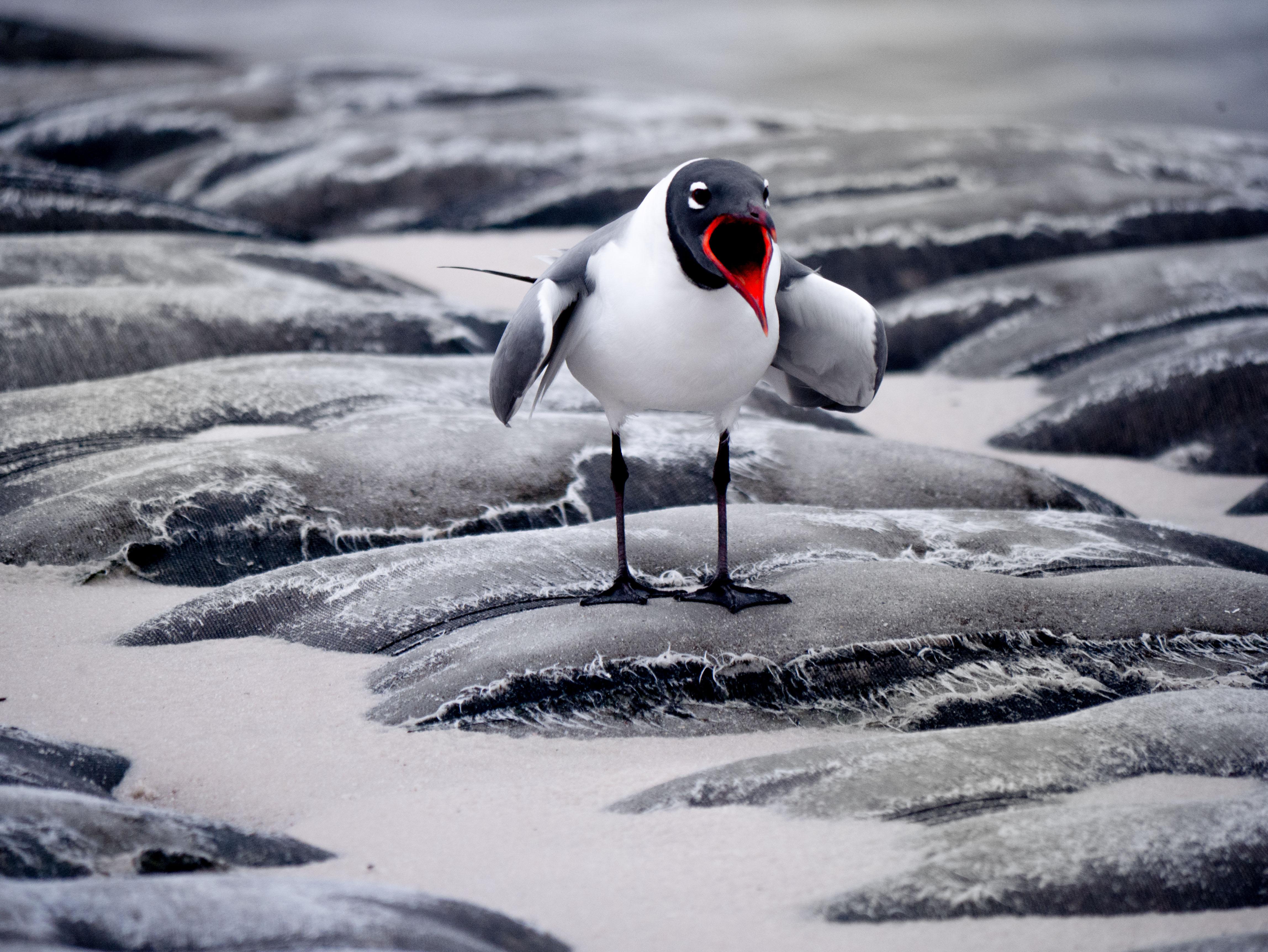 bird edit2.jpg